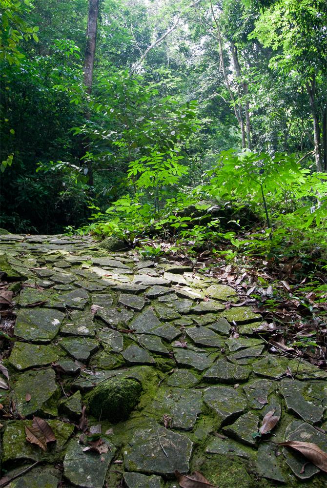 Paisaje-de-jungla-en-Trang