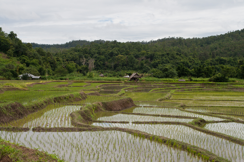 Paisaje-del-noroeste-de-Tailandia-II