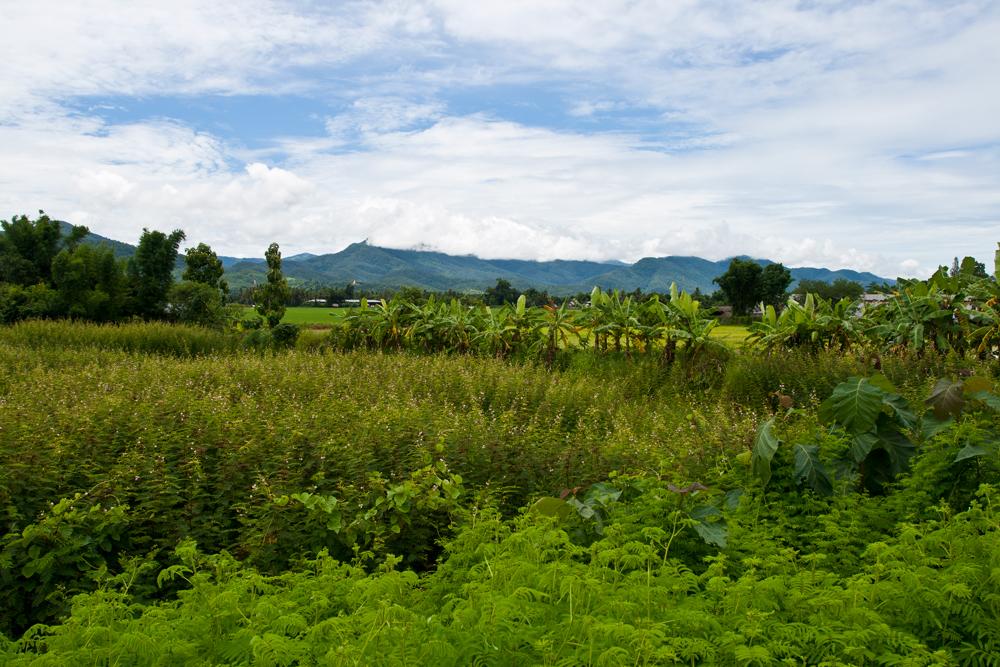 Paisaje-del-noroeste-de-Tailandia-III