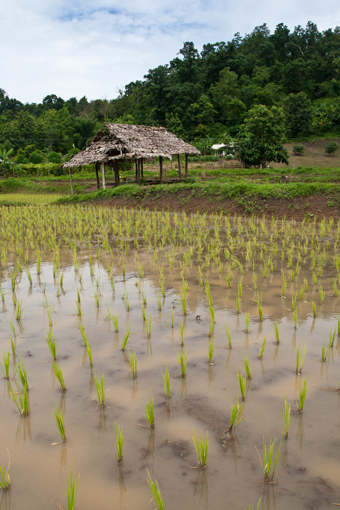 Paisaje-del-noroeste-de-Tailandia-IV