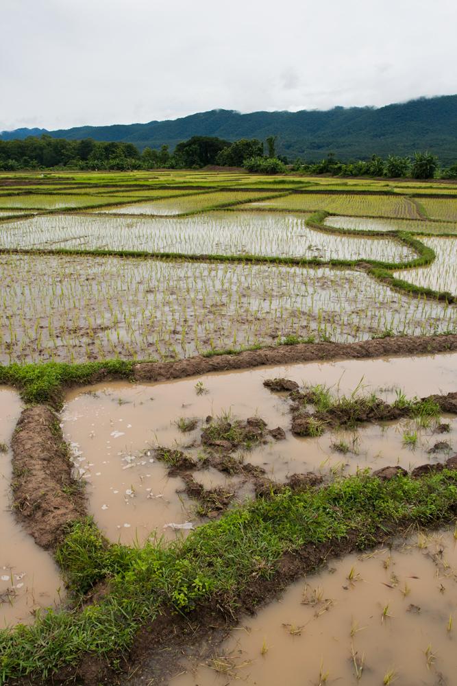Paisaje-del-noroeste-de-Tailandia-VII