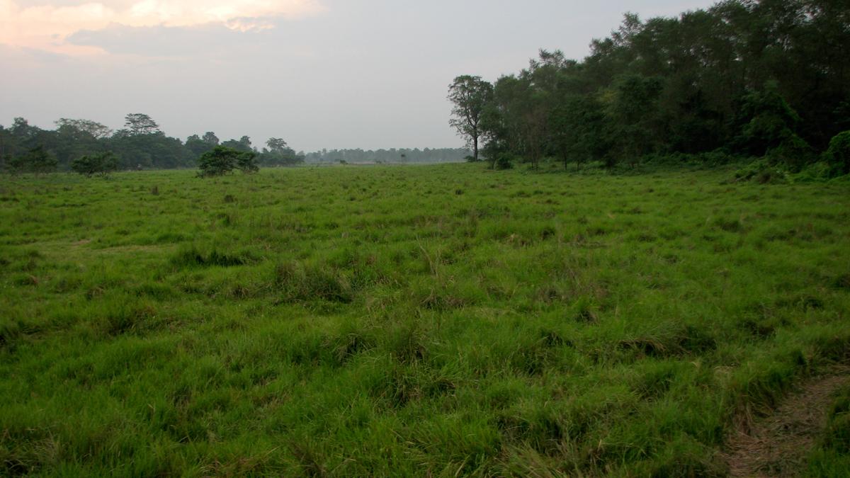 Parque-nacional-de-Chitwan-II