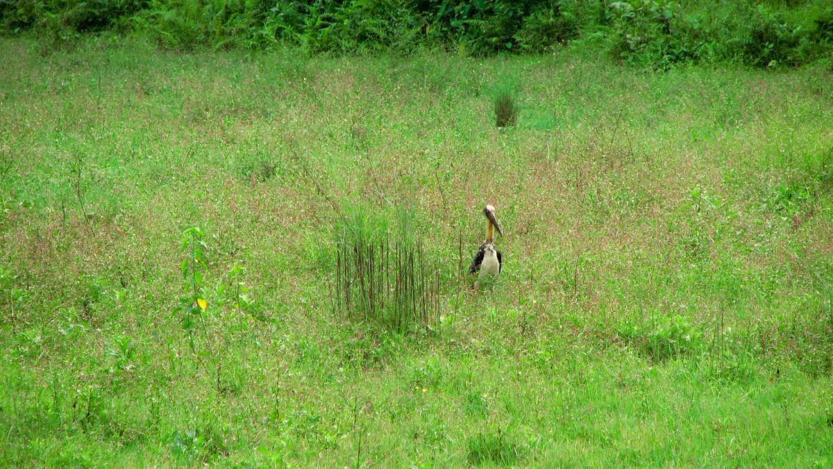 Parque-nacional-de-Chitwan