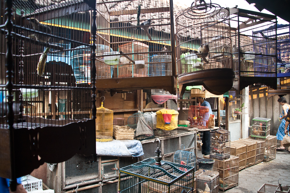 Pasar-Ngasem-o-Bazar-de-los-Pájaros