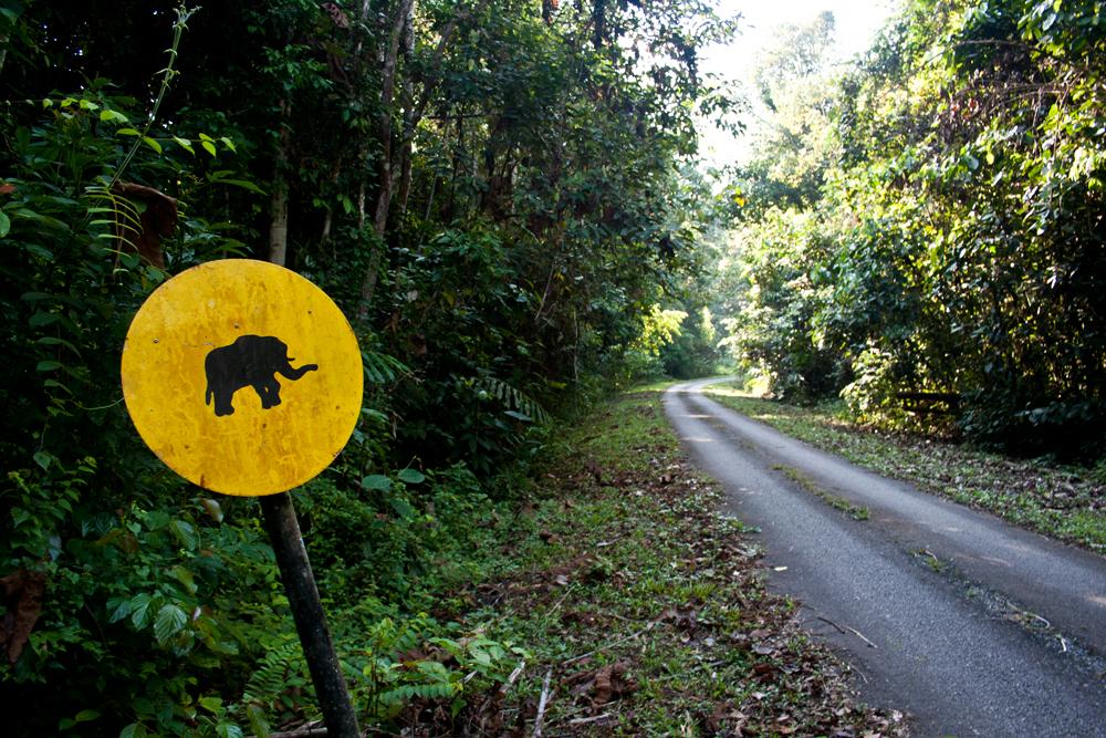 Paso-de-elefantes