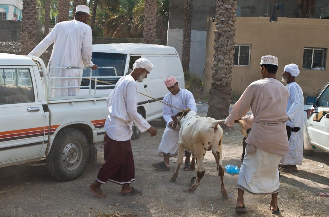 Preparando-el-Hajj