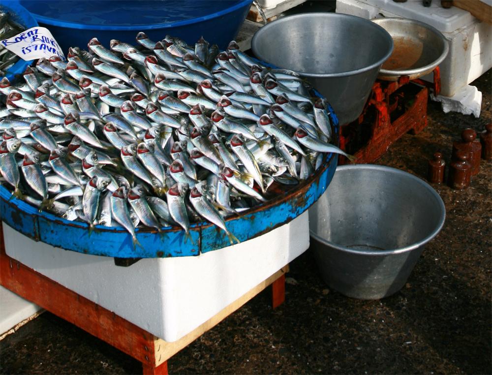 Recien-pescado