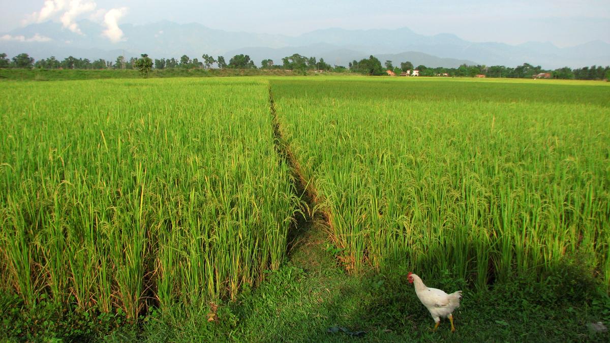 Región-de-Chitwan-III