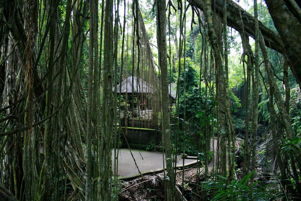 Templo-de-los-monos-II
