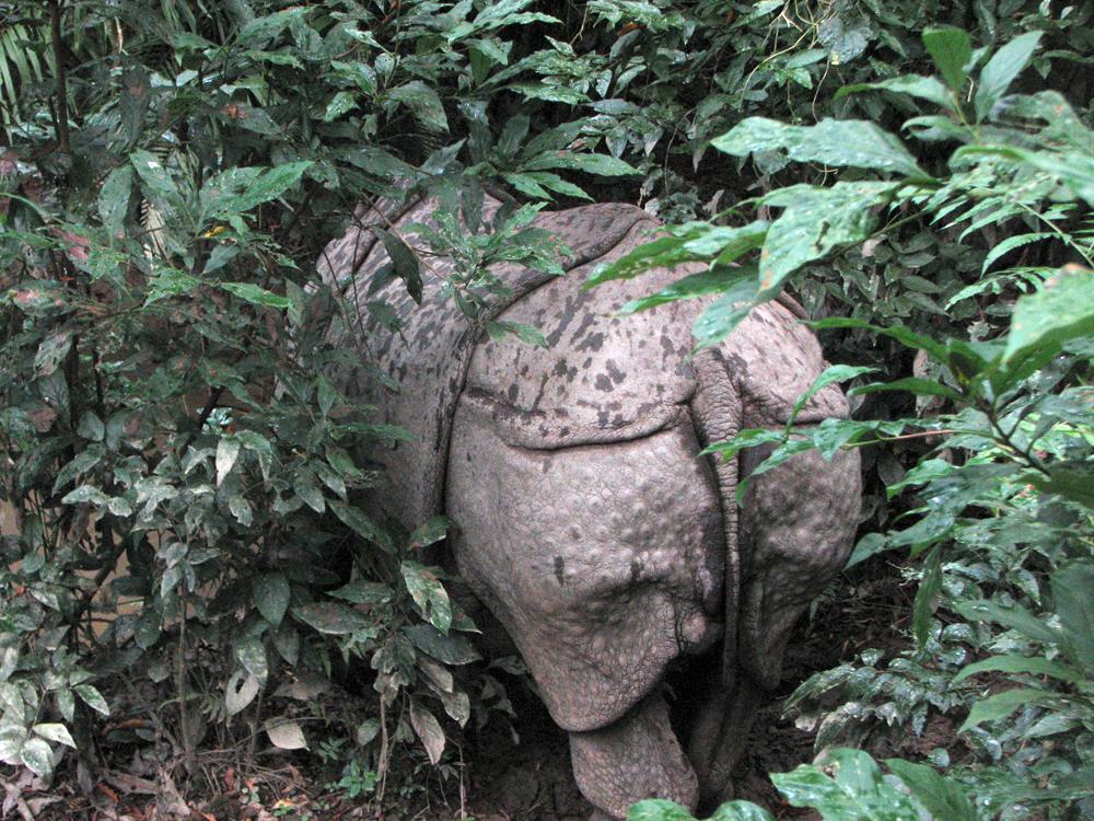 Trasera-de-Rinoceronte