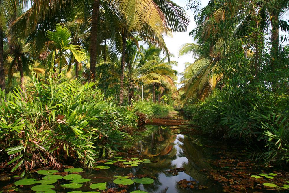 Vegetación-en-un-estrecho-canal