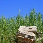 Restos-arqueológicos-III