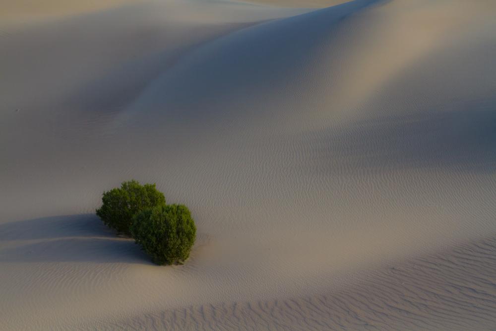 Dunas-mesquite-flat