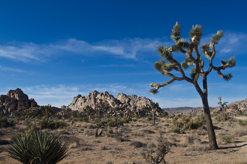 Parque-nacional-de-Joshua-Tree-II
