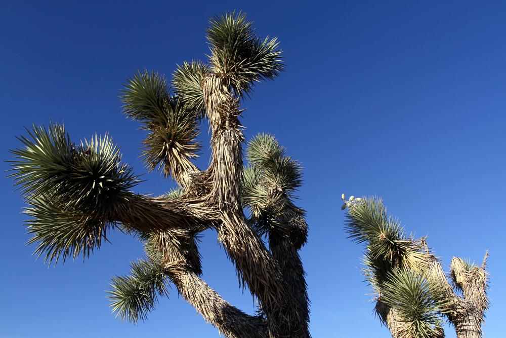 Parque-nacional-de-Joshua-Tree-VIII
