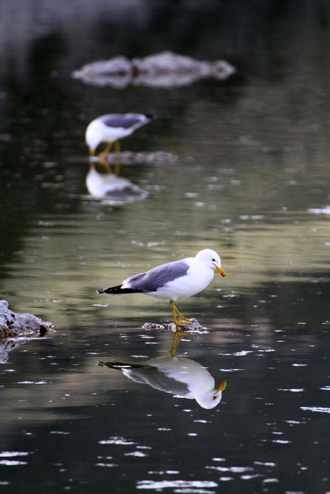 Reflejos-en-Mono-Lake-II