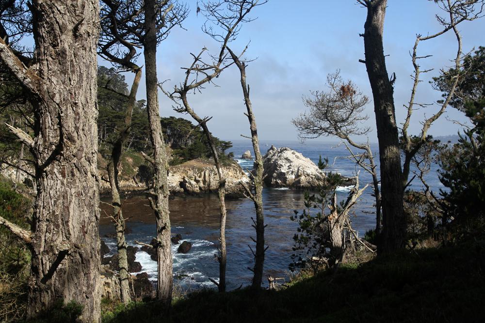 Reserva-Punta-Lobos-II