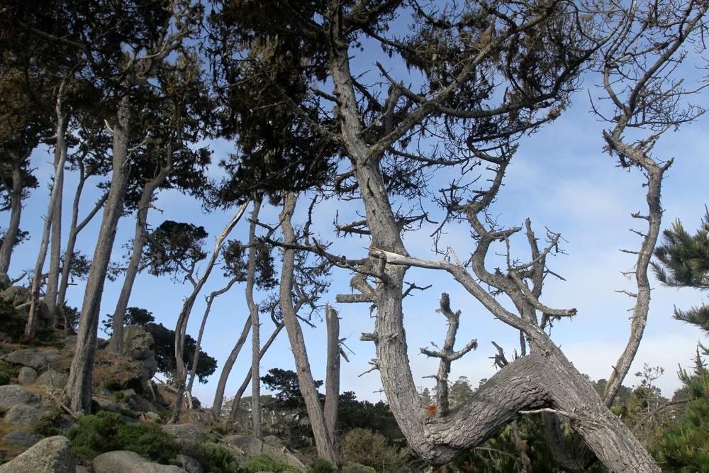 Reserva-Punta-Lobos-IV