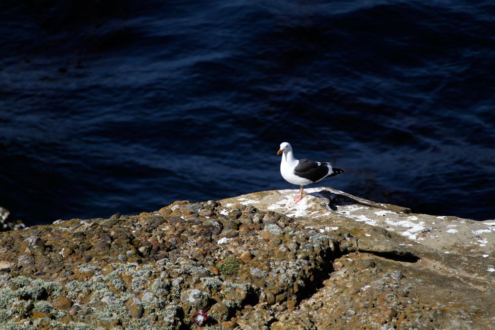 Reserva-Punta-Lobos