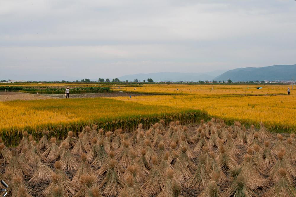 Campos-de-cultivo-en-la-provincia-de-Yunnan-en-China