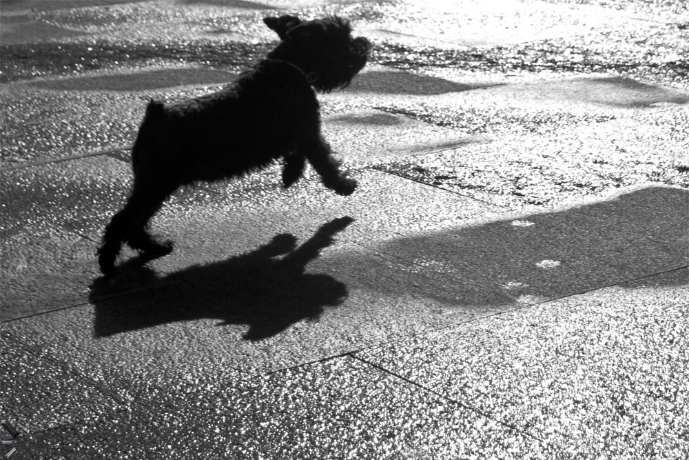 Contraluz-de-un-perro