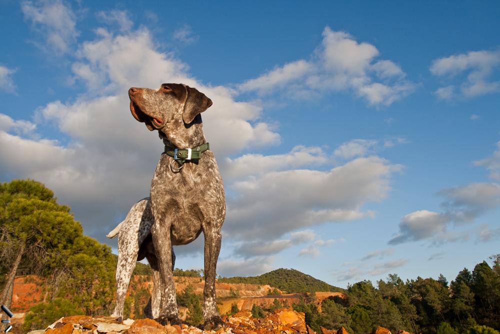 Estatua-canina