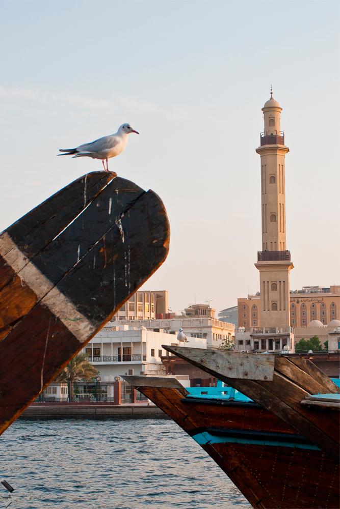 Gaviota-y-minarete-en-Dubai