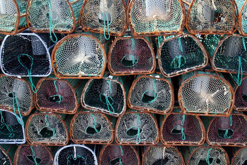 Jaulas-de-marisco