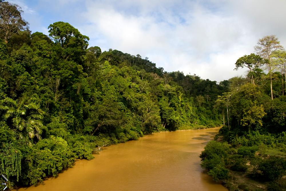 Selva-de-Taman-Negara-en-Malasia