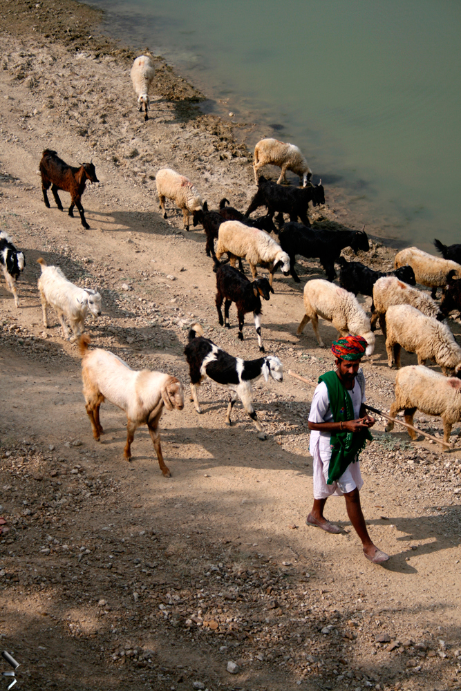 Un-pastor-en-la-India