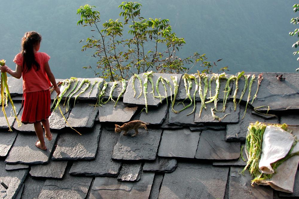 Un-tejado-concurrido