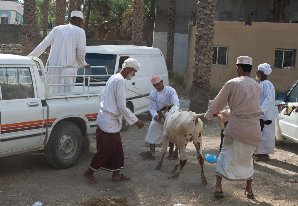 Nizwa II (Eid-al-Adha)